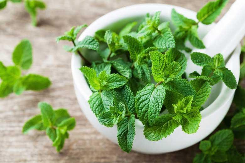 سبزی که عطرش هوش از سر می برد